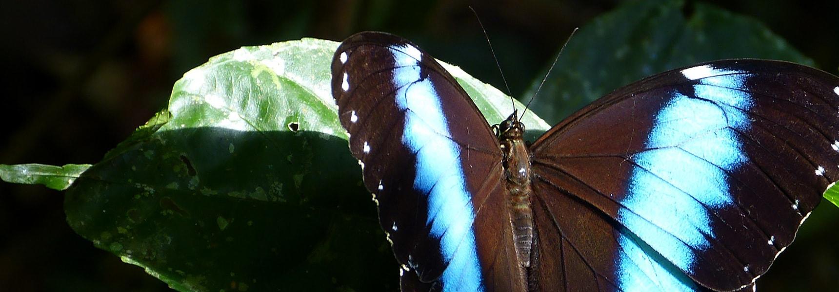 mariposa en Yasuní