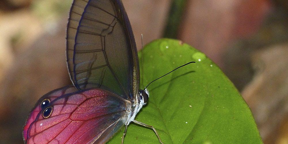 Publicada la «Guía de los Artrópodos del Parque Nacional de Yasuní»