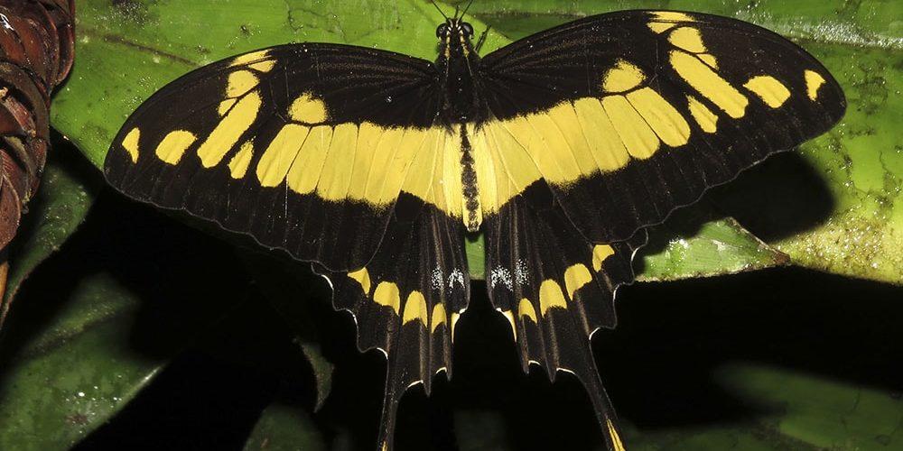 Las mariposas diurnas advierten del cambio climático
