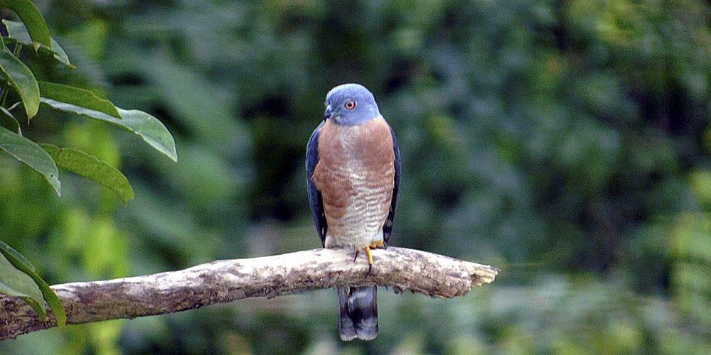 Ecuador contabiliza más de 1.600 especies de aves diferentes