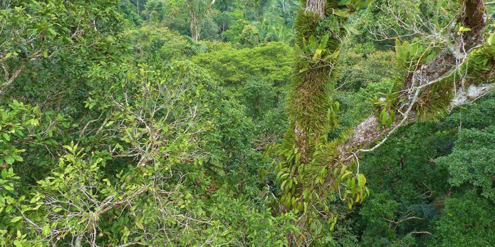 Turismo sostenible en el Amazonas